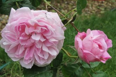 IMG_4633 Mary Rose
